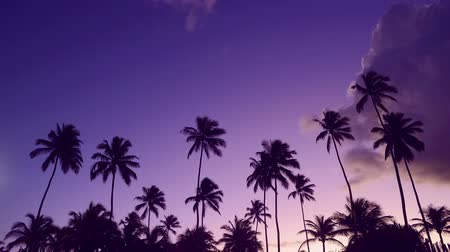 Timelapse summer time holiday sunset beach paradise with palm tree silhouette and sky. Wideo