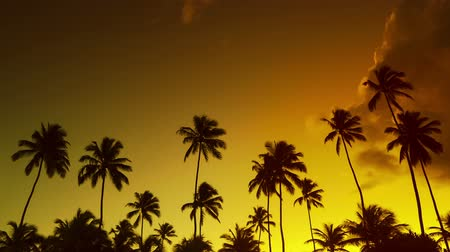 vacation destination : Summer tropical sunset timelapse paradise  beach with palm tree silhouette and golden sky.