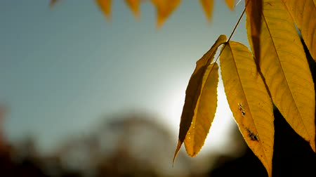 autumn : Sunny fall Stock Footage
