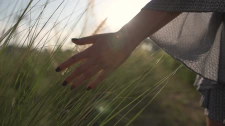 the girl goes touching the spikelets hand. sunset