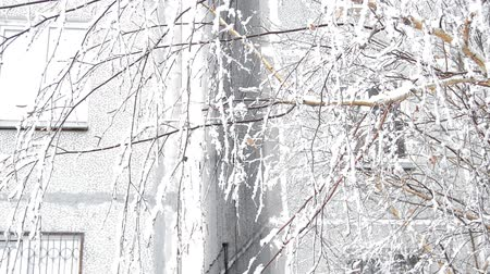 marchs financiers : Wind shakes tree branches in the yard near the house in winter Stock Footage