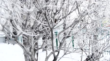 geada : Winter background frost on the branches. A look through the gloomy day Stock Footage