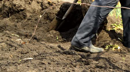 мерцание : Man finished shoveling the ground in the garden, he leaves, close-up of feet, shovel, pile of ground