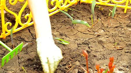 canteiro de flores : Womens hands in gloves loosening rake soil in a flower bed with sprouted flowers, spring work in the garden