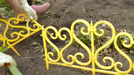 саженцы : Young woman gardener with gloves planting flowers on a bed and barred yellow beautiful fence Стоковые видеозаписи