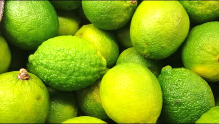 Closeup of bright whole green limes on the counter of a greengrocery, 4K video, slow motion, organic fruit background Vidéos Libres De Droits