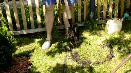 A man farmer in shorts with bare legs is digging a hole on a green lawn for planting trees in the garden with a shovel. Gardening in the summer or spring time, the suns bright light