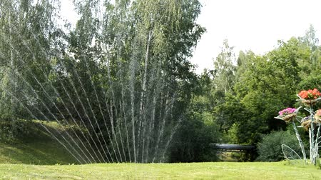 postřikovač : Watering the green lawn in the Park in summer on a Sunny day, water is sprayed in the form of a fan, against the background of trees, HD video