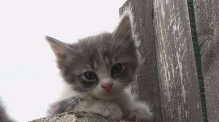 kotě : kitten watching