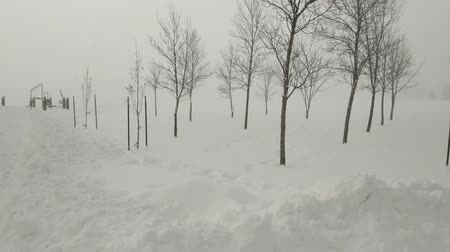 festividades : Deep snow in a rural area, with mist and fog after a blizzard. Snow scape with trees in the foreground. Slow pan left to right.