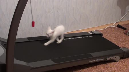 five striped : Kitty running on a treadmill Stock Footage