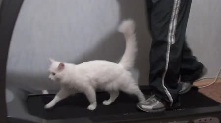 five striped : White cat and the man on the treadmill Stock Footage