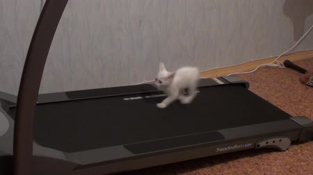game hunting : Kitten jumps on the treadmill