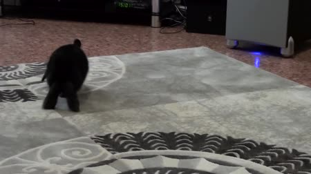 claw feet : Rabbit hopping across the carpet