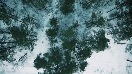 körképszerű : Coniferous trees at the bottom