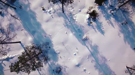 janeiro : Over the trees and snow
