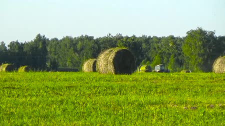 hay mowing : Tractor and hay stacks