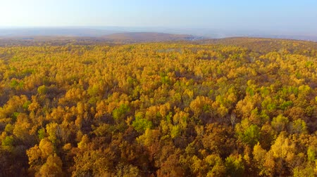 vivid wall : Flying over the yellow forest Stock Footage