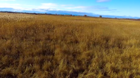 autumn leaves : Flying along the reeds Stock Footage