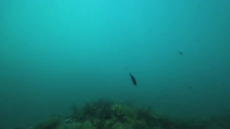 biodiverzitás : Scuba diver and fish swim in the sea