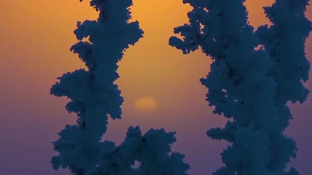 bizar : The sun behind the snow bushes Stockvideo