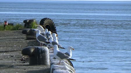 tyč : Seagulls sitting on the pier