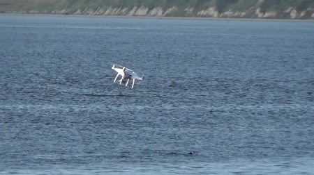 plemniki : Quadcopter over sea lions