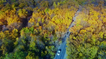 Cars in the colorful forest