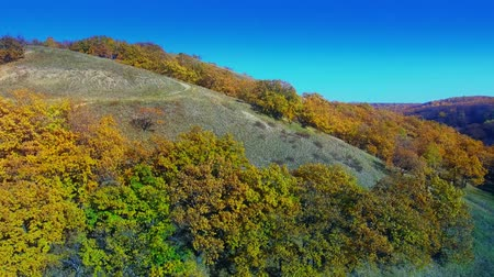 Multi-colored hill overgrown with forest