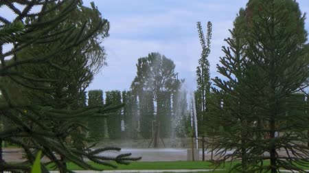 virágmintás : Fountain surrounded by exotic plants