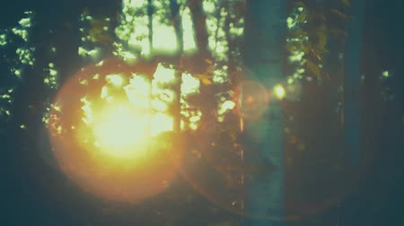 silvicultura : Sun Flares on Forest at Sunset