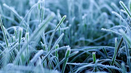 мороз : Grass at first frost Стоковые видеозаписи