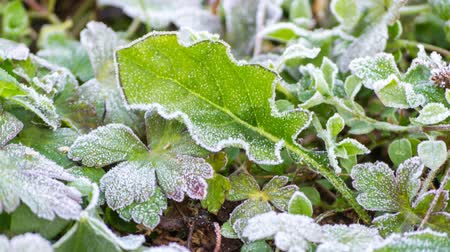 иней : time lapse frost on leaf melting
