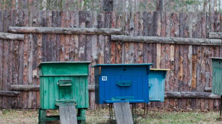 apiary : Hive for bees in the clearing near the house Stock Footage