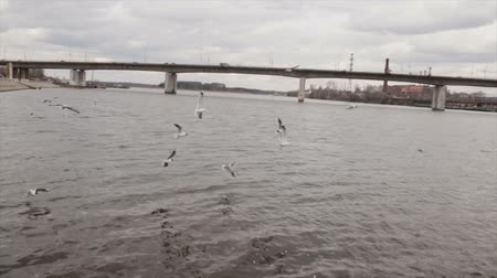 скольжение : Gulls in slow motion over the river