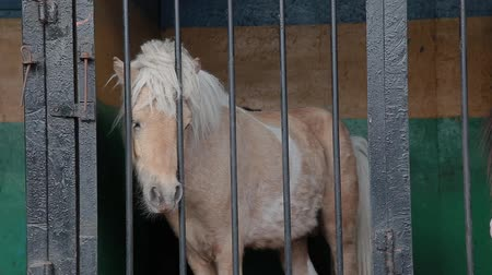 puré : Pony in the cage in the zoo is sad.