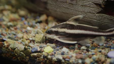 air pump : Aquarium with fish and green grass Stock Footage