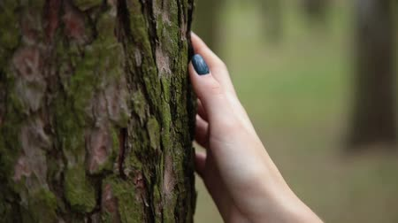 sentido : Woman hand on the bark of an old tree.