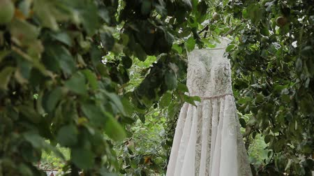 firmamento : White wedding dress hanging on a green tree, white bridesmaid dress hanging among the branches of a tree.