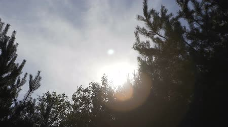 sun beam : Video 1080p - Crowns of trees with bright afternoon sun and rays