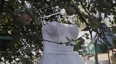 dangle : White wedding dress hanging on a green tree, white bridesmaid dress hanging among the branches of a tree