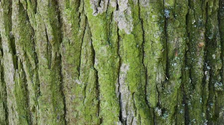 fakéreg : Tree bark close up. Sunny bright day.