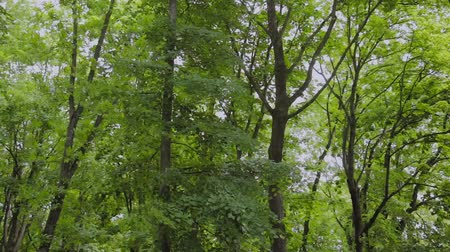 de faia : Green branches of trees in the city park in the summer.