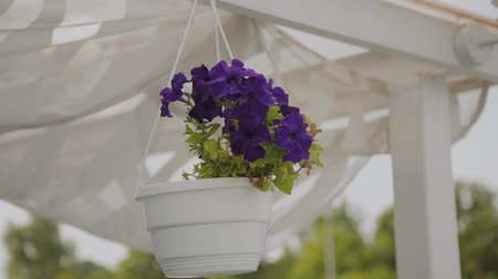 orquídeas : Beautiful blue flowers hanging in a pot on the roof. Stock Footage