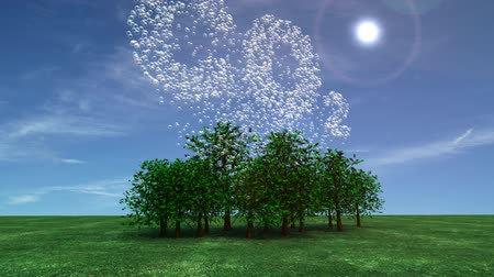 fotoszintézis : Visualization of carbon dioxide being absorbed from the atmosphere by trees.