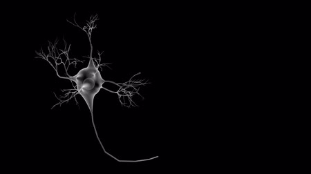gotículas : A single neuron or brain cell or nerve cell growing. An impulse then travels along the axon.