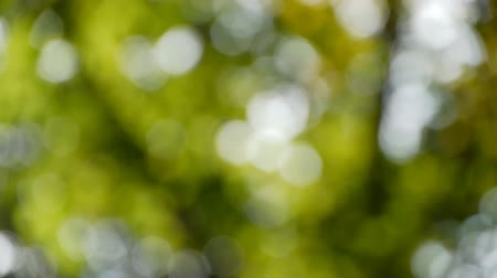 esinti : Blurred leaves blowing about. Genuine bokeh, not done in post. Stok Video