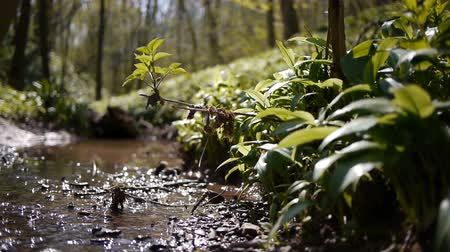 vurgulamak : Still shot of a shallow woodland stream. The background is out of focus to emphasize the plants on the bank of the stream.