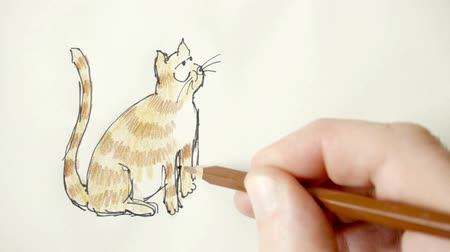 caráter : Drawing a cartoon cat.