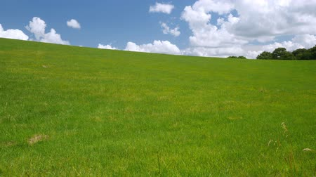 huzurlu : Green grass meadow. The grass is blowing about a bit. Blue   sky with cumulus clouds.